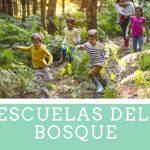 escuelas del bosque